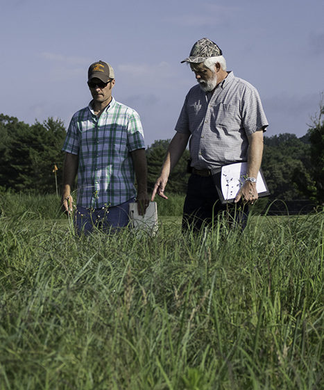PhD student Johhny Richwine and professor Pat Keyser inspect a field of tall native grasses.