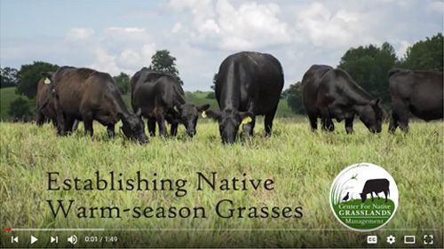 Establishing Native Grasses video still